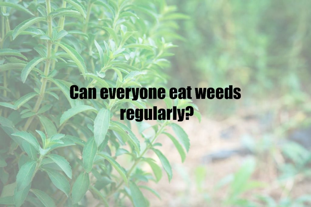 Can everyone eat weeds regularly?